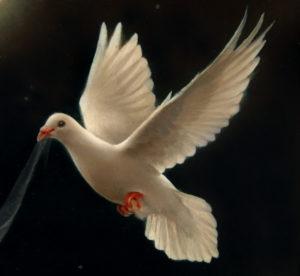 Biały Gołąb7